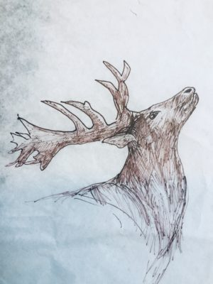 Brown in Sketch of calling Stag